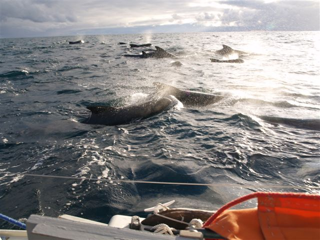 Scores of whales made their endless passes